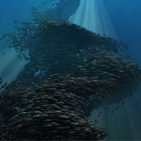Creating An Animated Fish Swarm In Blender Using Particles: The Complete Workflow