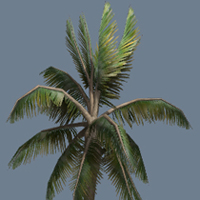 Speedtree to UDK: Creating A Palm Tree In Speedtree And Importing It Into UDK