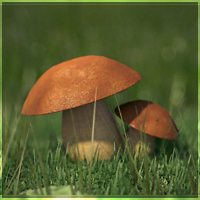 Revealing Nature's Magnificence: Creating A Mushroom Macro Render – Part 3
